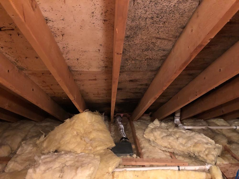 bathroom fan vent into the attic
