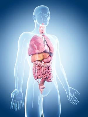 Nettoyage Vesicule Biliaire Danger : nettoyage, vesicule, biliaire, danger, Nettoyage, Tractus, Gastro, Intestinal,, Vésicule, Biliaire