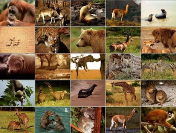 Resultado de imagen para animales de sangre caliente collage