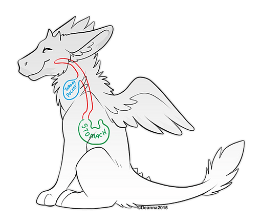 [OOC] The Angel Dragon (Solo) — Roleplayer Guild