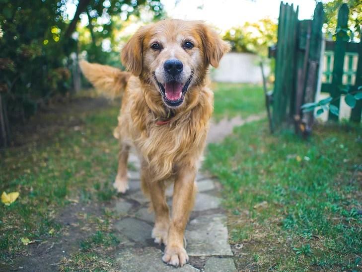 Vitamina para Cachorro Engordar