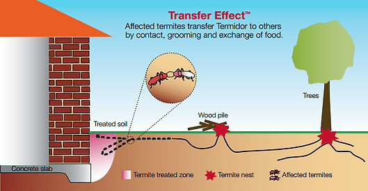 Termite Inspections and Termidor Termite Barriers এর ছবির ফলাফল