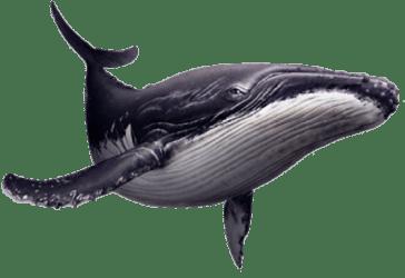Home Rudolf the vegan whale