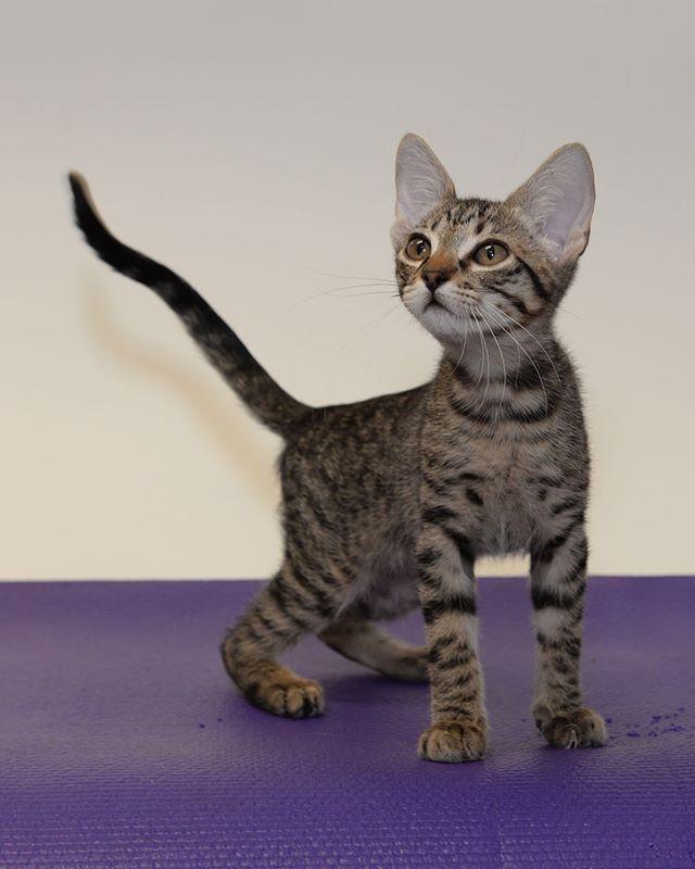 fullscreen page cat haven