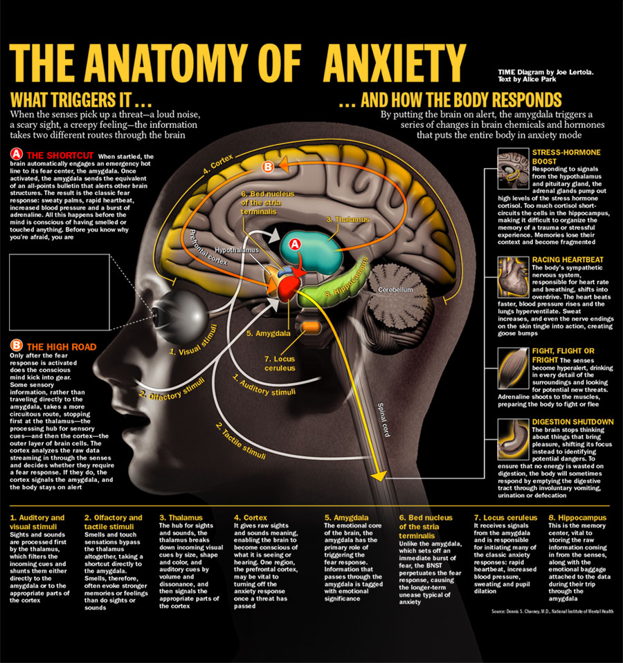 the anatomy of anxiety diagram yamaha warrior 350 carburetor rita hayes ease your mind therapy and e