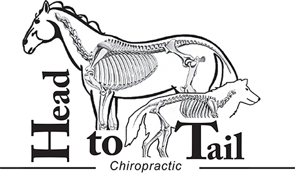 Head to Tail Chiropractic animal chiropractor