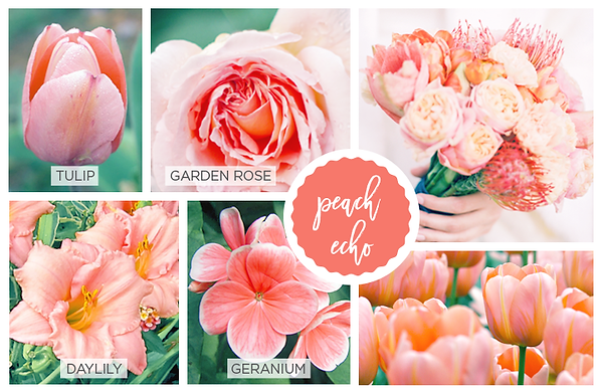 Spring Flowers and Pantone Color Guide on MyHumbleHomeandGarden.com