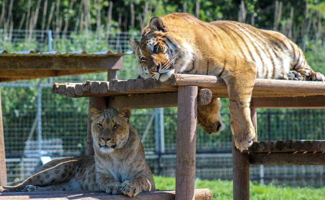 The Greater Wynnewood Exotic Animal Park