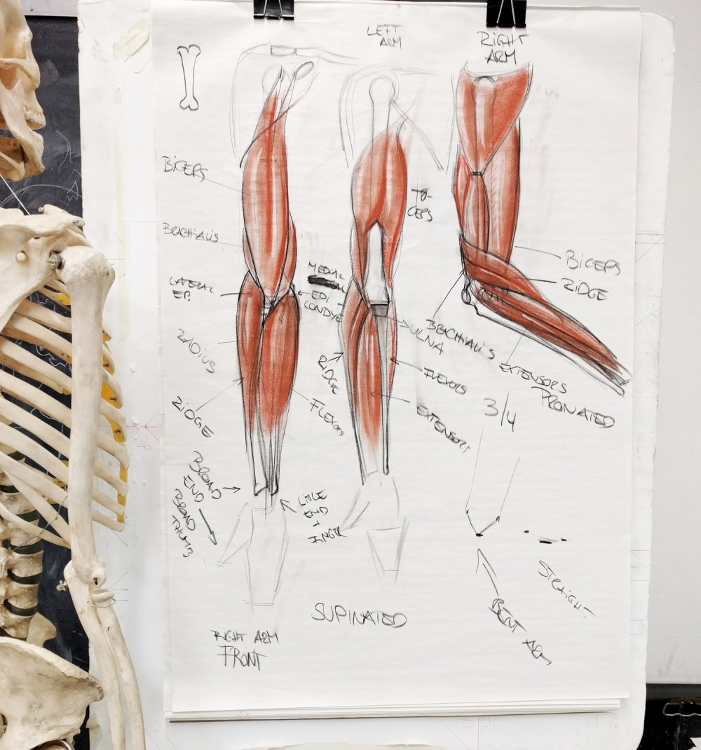 medium resolution of lecture page various arm positions