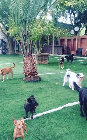 dog boarding dog daycare