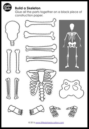 My Body: Bones and Skeleton Activities and Printables for K-2