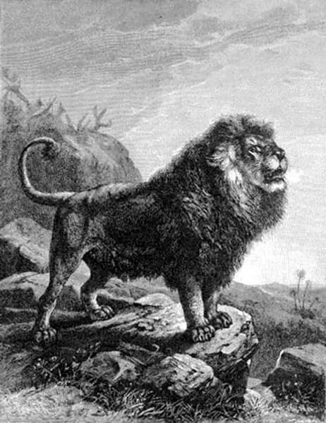 Le Lion De L Atlas : atlas, L'Atlas, Histoire, Berbères