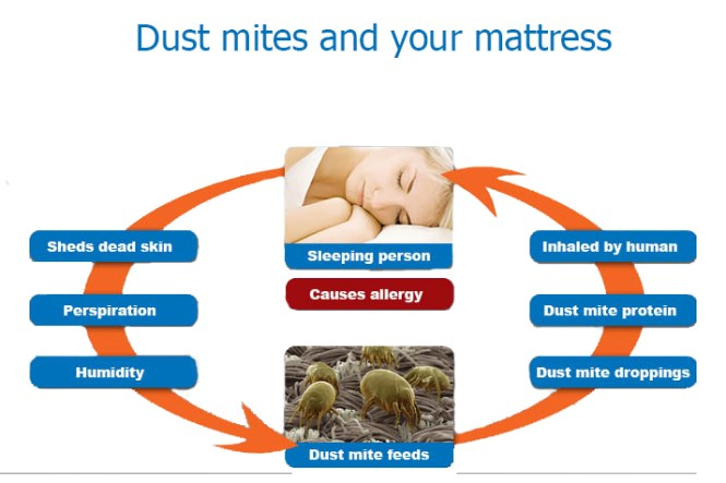 Is Latex Mattress Really Anti Dust Mites Natural Thailand