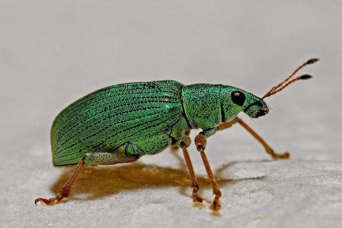 , 10 Stunning African Creepy Crawlers, The Travel Bug Bite