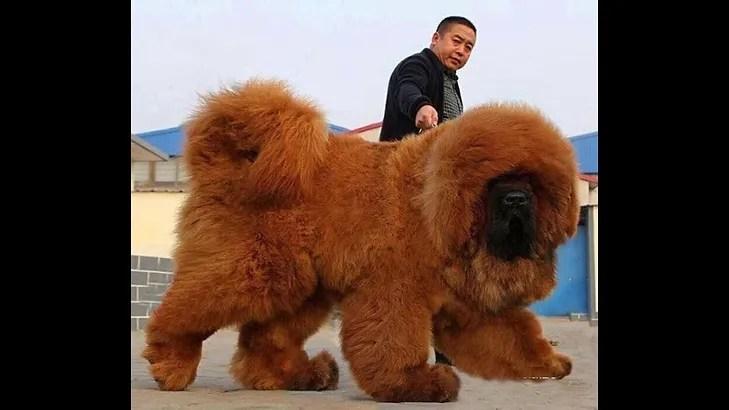 o cachorro mais caro do mundo