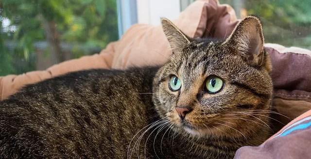 cat shelter ellen m