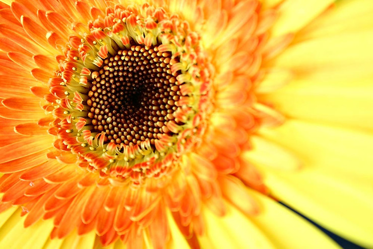 Up close image of sunflower