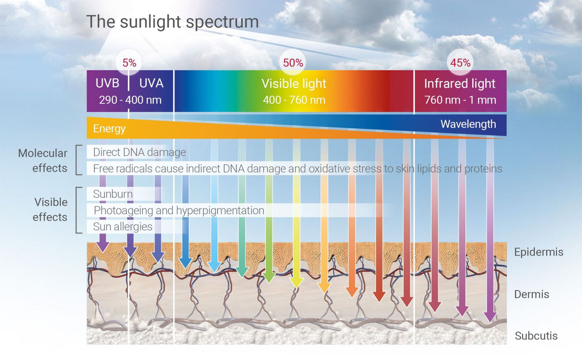 hight resolution of uva rays can penetrate deep into your skin s surface down to your epidermis and your dermis they are responsible for giving us tanned skin but