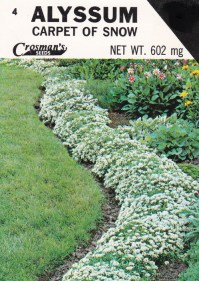 Alyssum: Carpet of Snow | crosmanseeds
