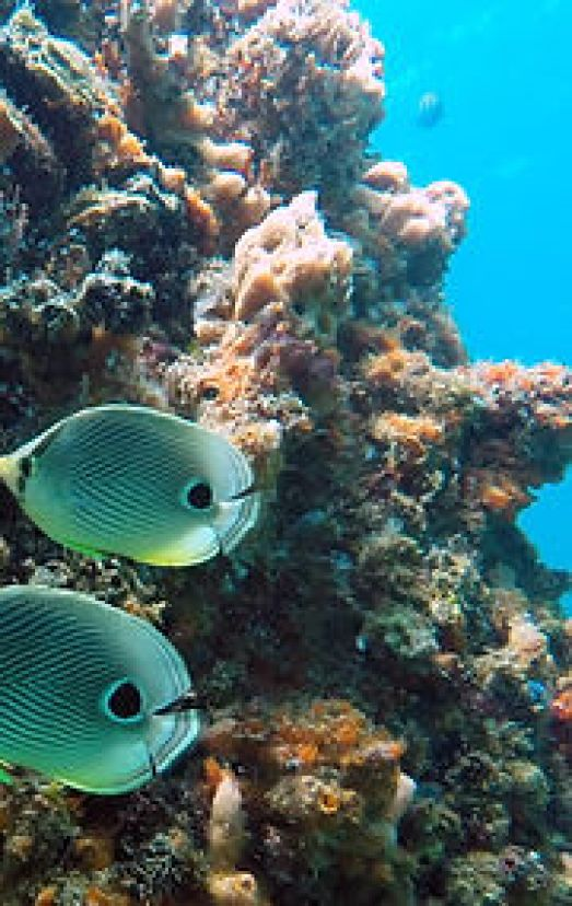 Scuba diving courses in Samana, Las Terrenas, Dominican Republic