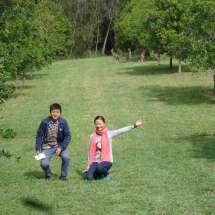 Macadamia Nut Farm Macksville Nsw