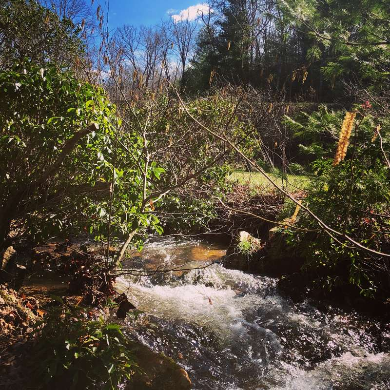 Help Around Our One Acre Homestead In The Chattahoochee