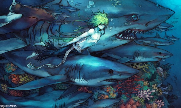 Shark - Animal Zerochan Anime Board
