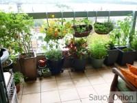 Balcony Gardening Tips India, Balcony Gardening Ideas for