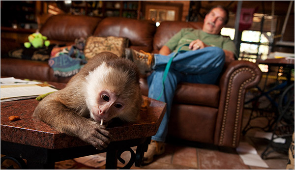 Sharing Your Home With a Primate or If a Cat Just Isnt