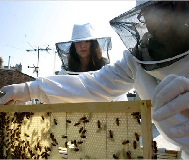 Beekeepers Keep The Lid On
