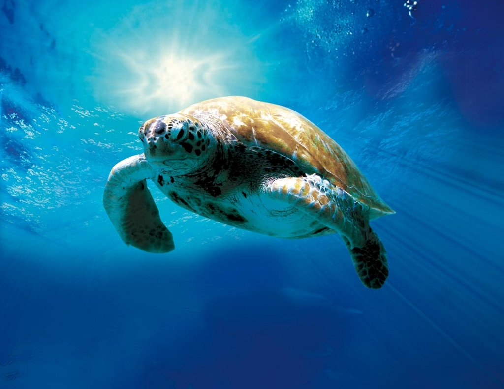 Turtle The Incredible Journey A Loggerhead Epic