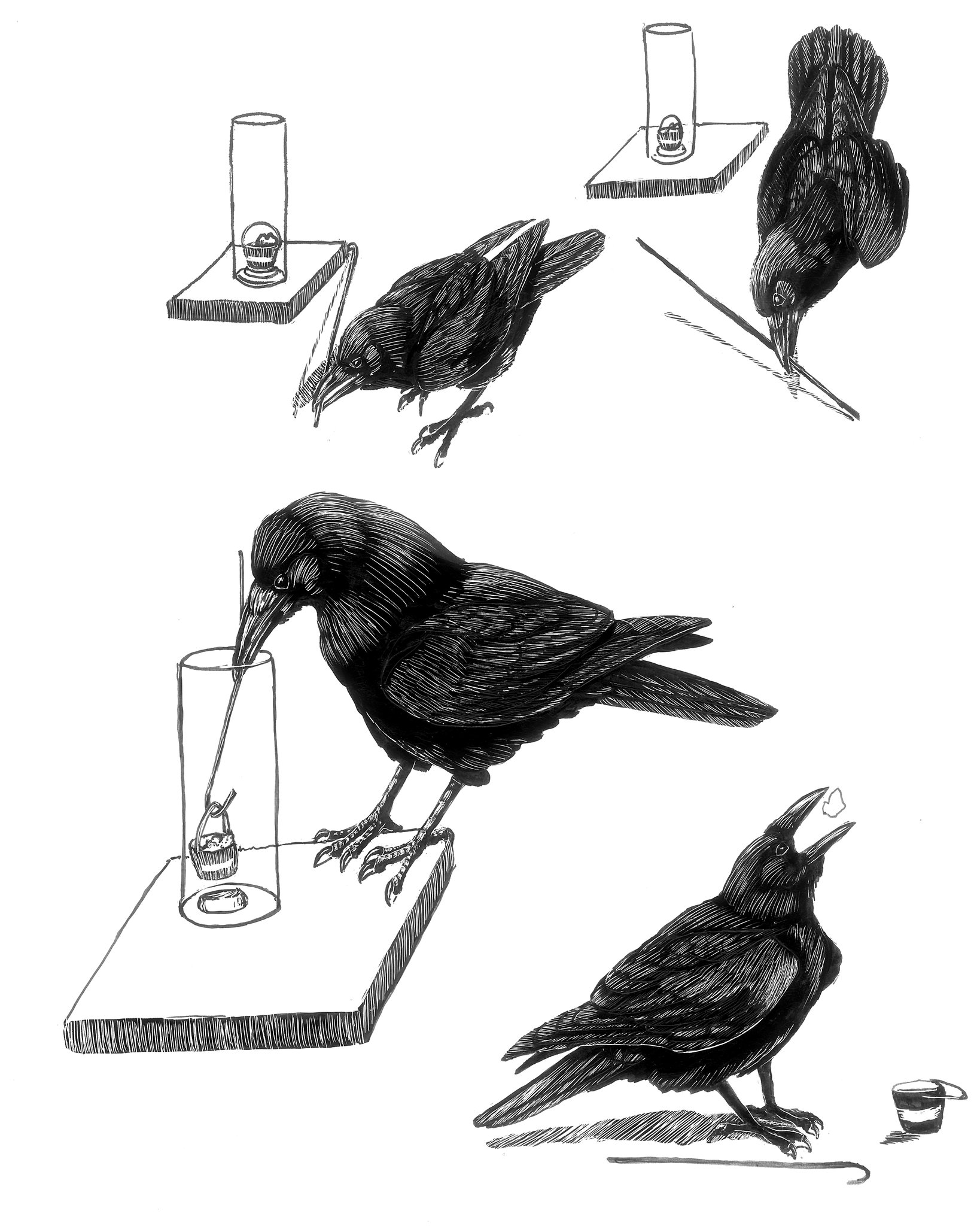 'Gifts of the Crow' and 'Bird Sense': The Lives of the