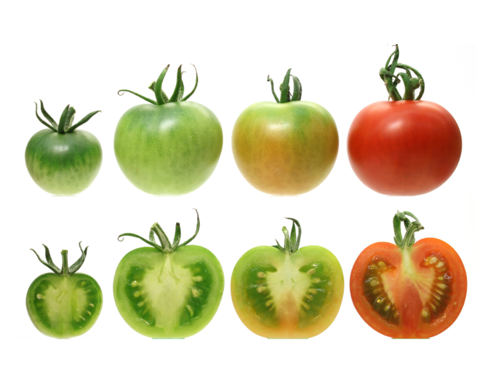 Flavor Is The Price Of Tomatoes Scarlet Hue Geneticists