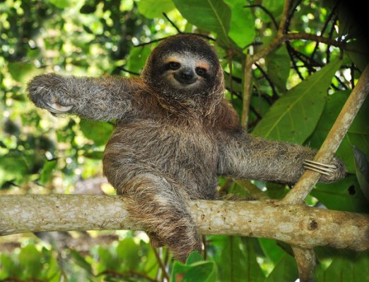 The Sloth's Busy Inner Life - The New York Times