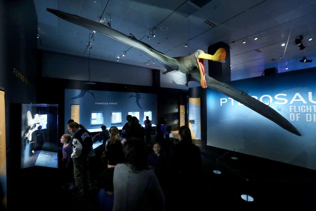 Natural History Museum Explores the Wonders of Pterosaurs