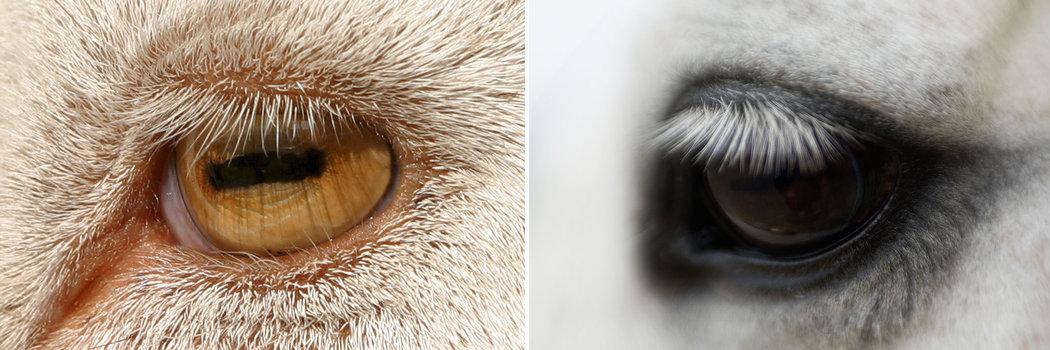 為什麼掠食性動物總是「眼露兇光」? - 紐約時報中文網