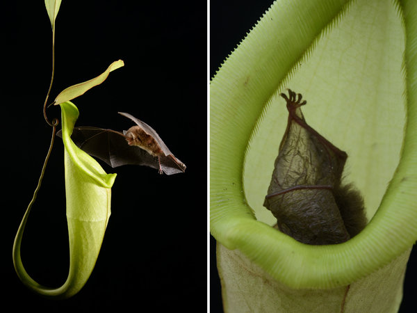 contoh simbiosis mutualisme