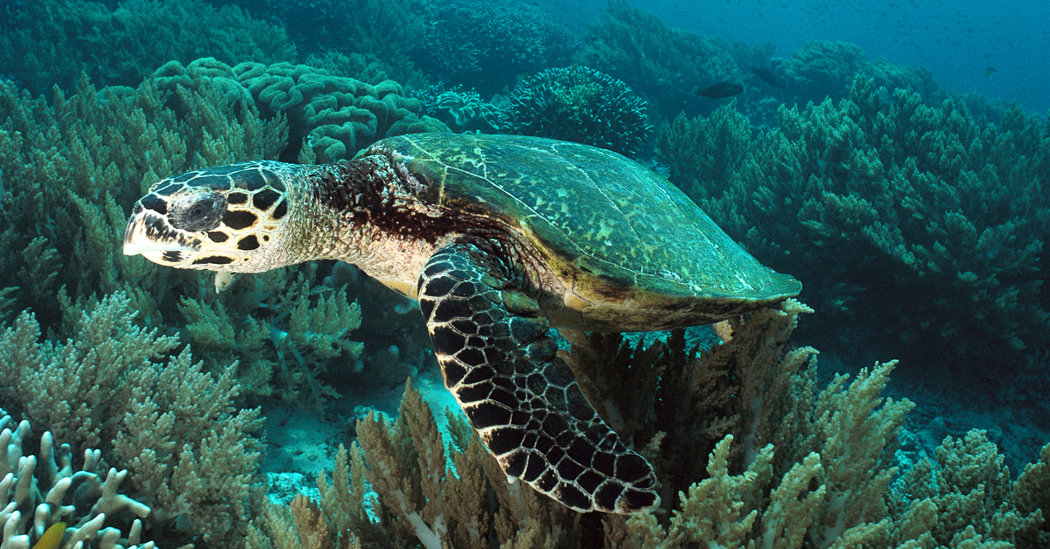 Cute Sea Turtle Wallpaper Old Nuclear Fallout Proves Useful For Sea Turtle Clues