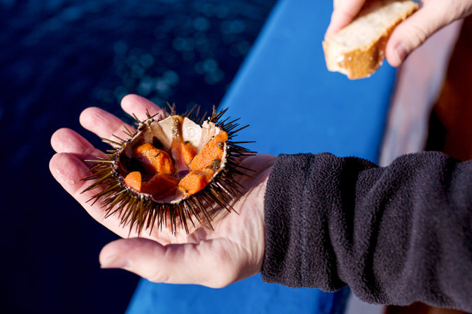 On the Costa Brava of Spain a Sea Urchin Quest  The New