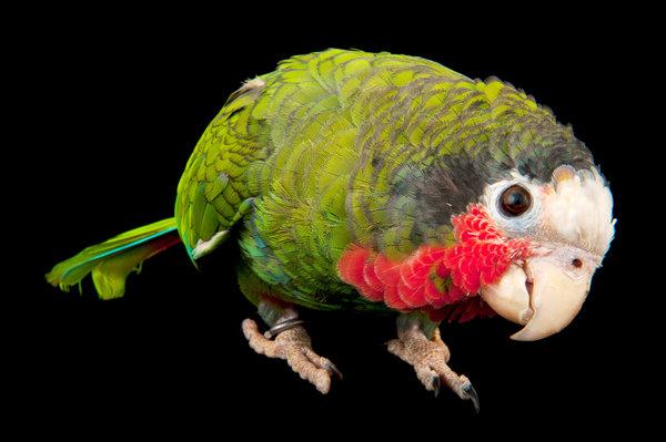 parrots are a lot