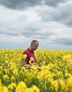 Doubts about the promised bounty of genetically modified crops also rh nytimes