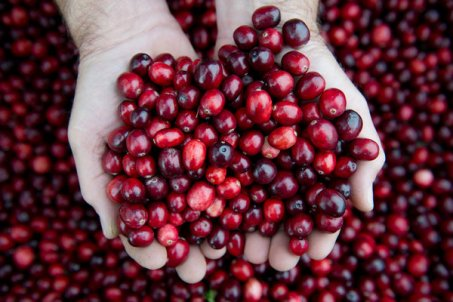 Image result for cranberries