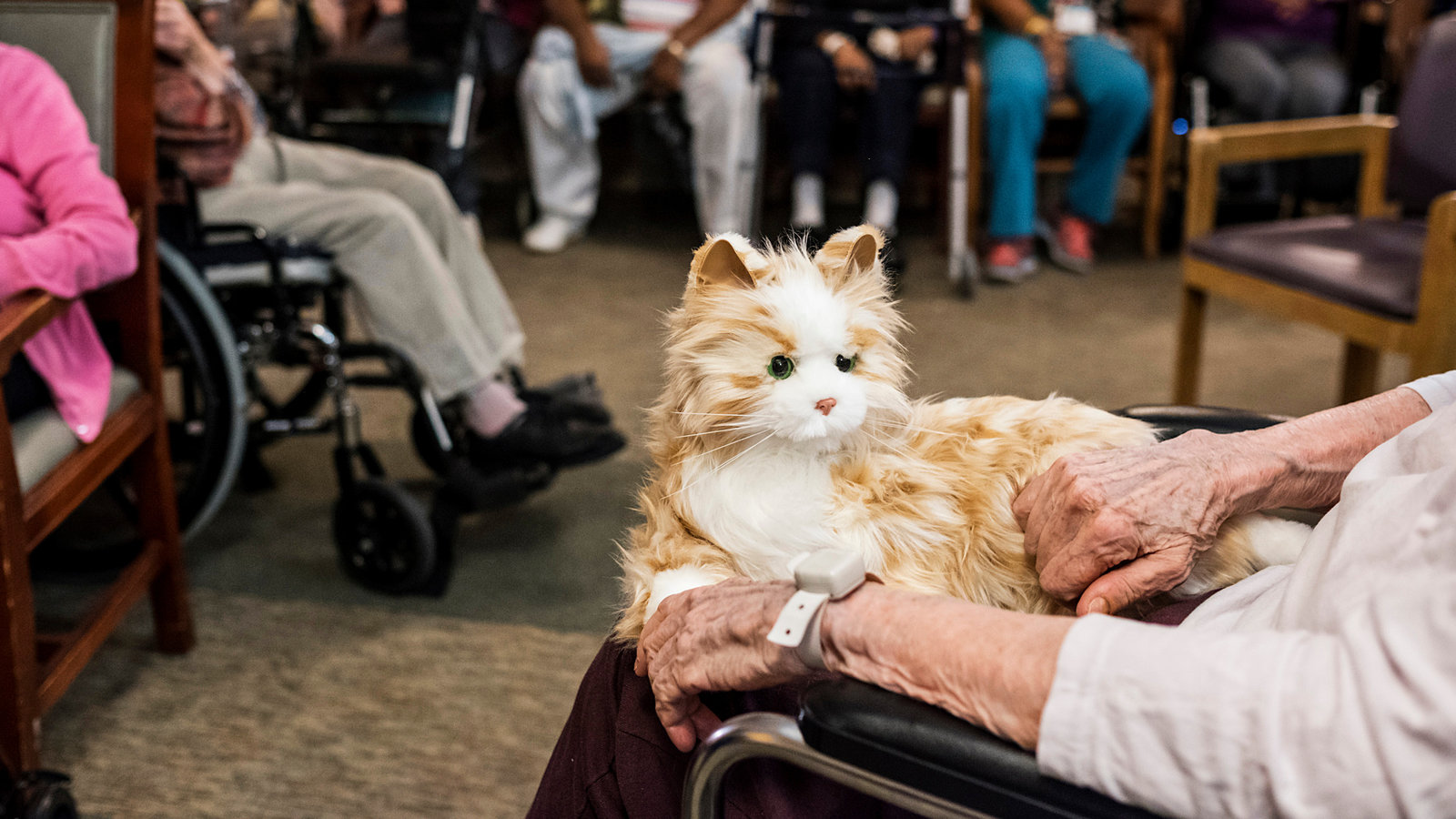 Therapy Cats for Dementia Patients Batteries Included