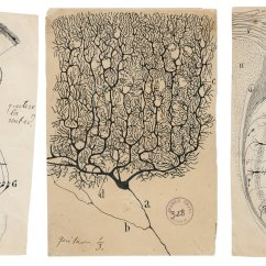 How To Create A Flow Diagram Ixl Tastic Sensation Wiring Hunched Over Microscope, He Sketched The Secrets Of Brain Works - New York Times