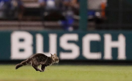 Rally Cat Running Across the Field