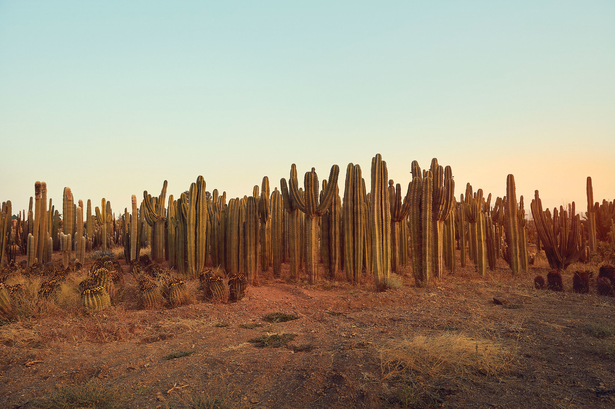 One of the Largest Cactus Farms in Africa  The New York Times