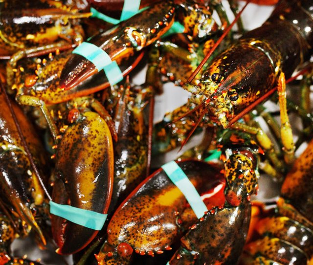 Trumps Trade Policy Is Lifting Exports Of Canadian Lobster The New York Times
