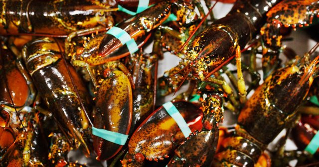 Trumps Trade Policy Is Lifting Exports Of Canadian Lobster