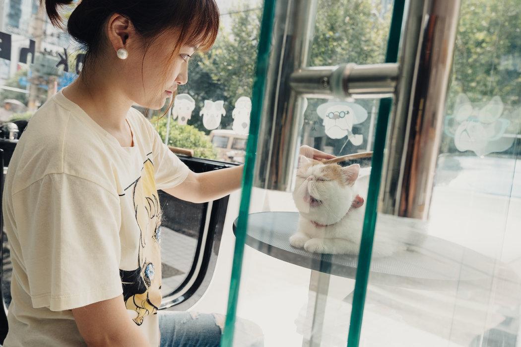貿易戰的附帶傷害:中國寵物吃什麼? - 紐約時報中文網
