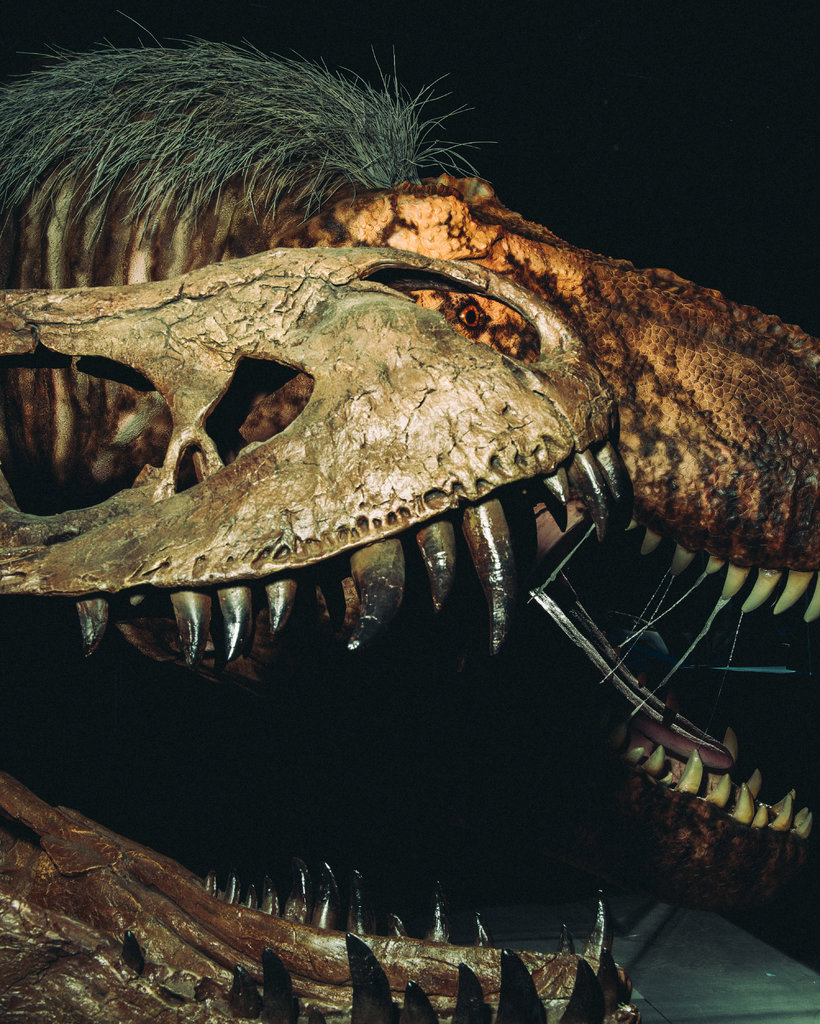 New York - T-Rex For Sale - Motorcycles - Cycle Trader